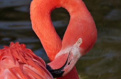 Flamingo, Foto: Christoph Barthel