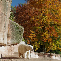 Autum in Nuernberg Zoo